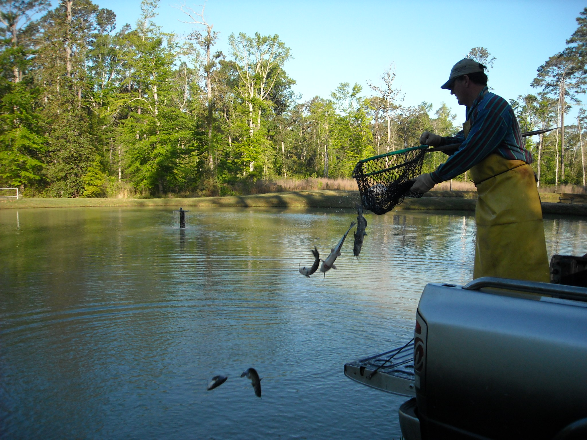 Fishing for Pond depth for fish
